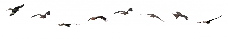 Vögel7-34-ps